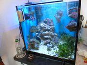 Meerwasser-Aquarium Technik Beleuchtung Komplett TOP