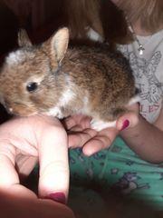 Kaninchen Junges bitte helfen