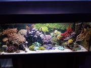 Meerwasseraquarium Auflösung reserviert