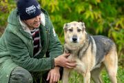 Rüde Wölfchen sucht eine liebevolle