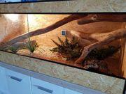 Terrarium 150x60x60 fast zu verschenken