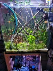 Aquarium 350l cube