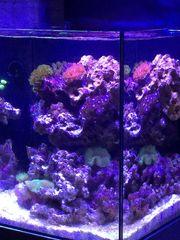 Meerwasseraquarium zu verkaufen