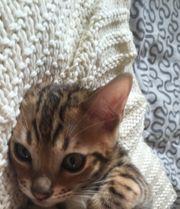 3 süße Kitten suchen neues