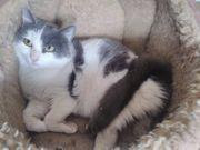 Tapferes Katzenmädchen Coco sucht ihre