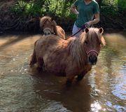 2 superliebe Ponys