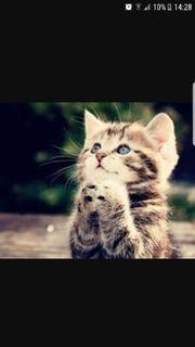 Suche eine Babykatze