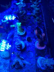 Meerwasser Auflösung Korallen Lebendgestein