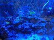 ich verkaufe mein Meerwasser Aquarium