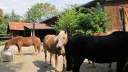 Offenstallplatz frei für Allergiker-Pferd