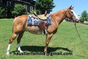 Paint Horse Wallach Sango