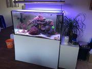 Meerwasseraquarium 430L - Komplett -