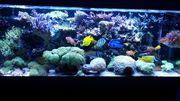 Meerwasser Korallen LPS