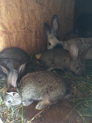 Kaninchen Jungtiere