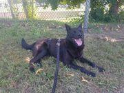 Mischlingshund sucht Traumkörbchen