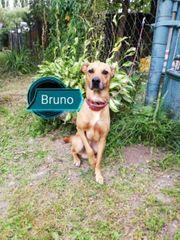 Bruno wünscht sich sein Zuhause