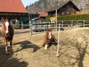 Kleiner Pferdestall