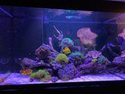 Meerwasseraquarium Korallen beckeninhalt