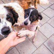 Freundliches Hundemädchen Contessa
