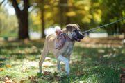 Diverse Tierschutzhunde sind auf Körbchensuche