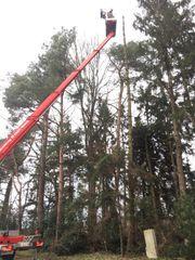 Baum-Kronenschnitt vom Baumservice-Fachmann mit Klettertechnik