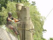 Dienstleistungen Baumpflege und Baumfällung