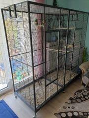 Papagei käfig