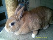 2 Kaninchen suchen