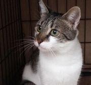 Daisy liebe Katzendame ca 2