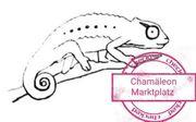 Chamäleon Pantherchamäleon Whatsapp Gruppe