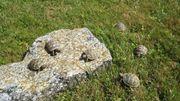 kleine Landschildkröten