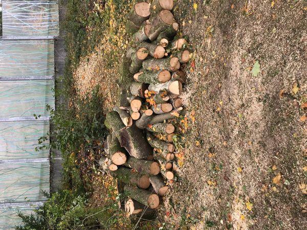 3-5m³ Holz kostenlos zum Abholen