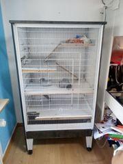 Ratten mit Käfig zu verschenken
