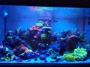 Meerwasseraquarium 130x70x60 und jede Menge