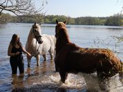 Reitanlage Fläche zur Pferdehaltung