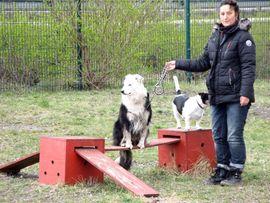Spezialbetreuung in der Tierpension Bennstedt: Kleinanzeigen aus Bennstedt - Rubrik Tierbetreuung