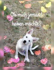 Tierschutzhund Casper