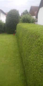 Hecken schneiden Rasen mähen und