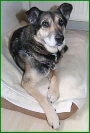 Sarus 8 Jahre - Mischling - Tierhilfe