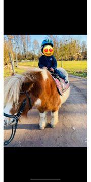 Ponyreiten Kinderreiten Kindergeburtstag