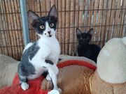 Elisa fröhliches Katzenmädchen ca 4