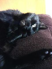 Katze Muggi 8 Jahre sucht