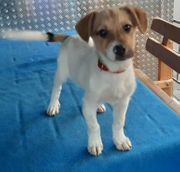 Junghund Lucano sucht ein Zuhause