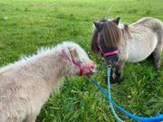 Verk Ponygespann mit Kutsche