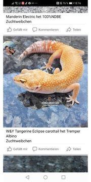 W Y Tangerine Eclipse carocktail