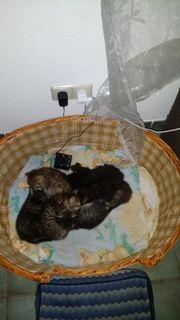 Katzenbabys suchen ein