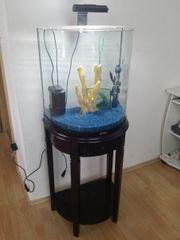 Verkaufe 60 Liter Tetra Aquarium