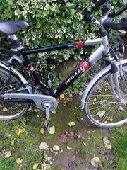 Fahrrad Pegasus Herren