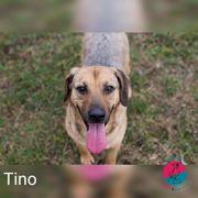 Tino- wartet auf seine große