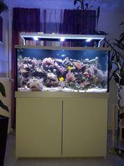 Meerwasseraquarium Red Sea MAX S